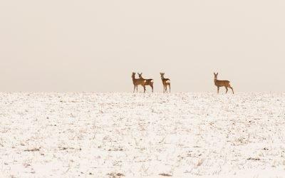 Winter, Bambis