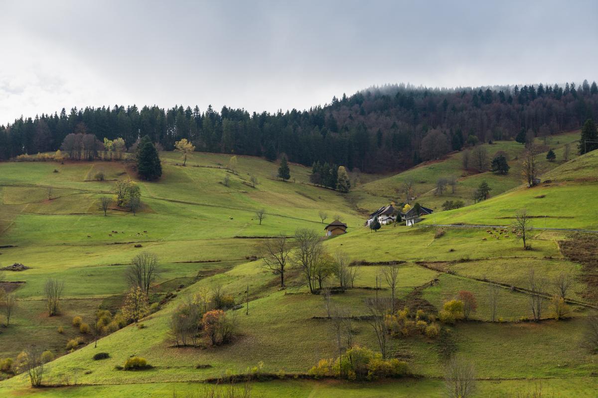 Schwarzwald_Bergblick