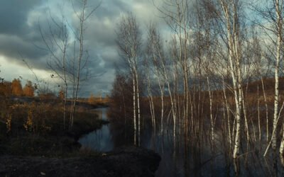 Lappwaldsee